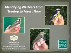 Identifying Warblers Craig Presentation screenshot resized