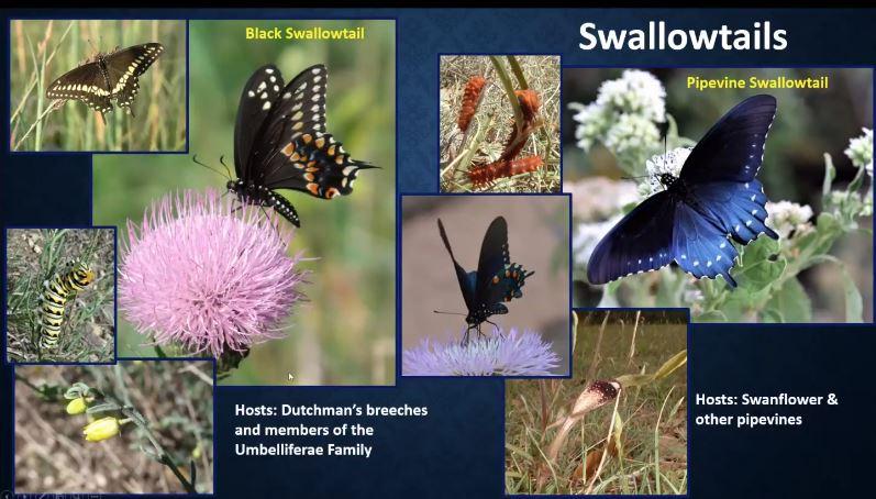 Native Plants & Butterflies Screenshot