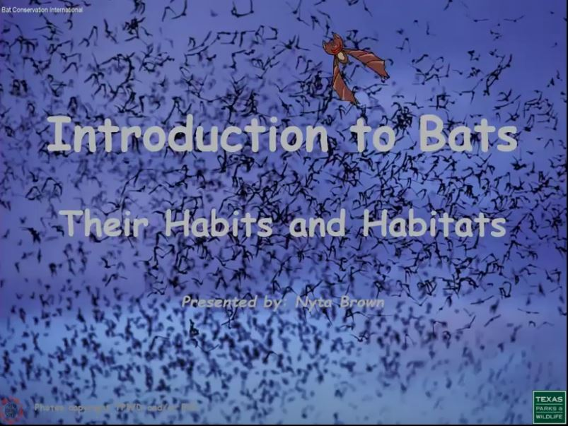 Intro to Bats