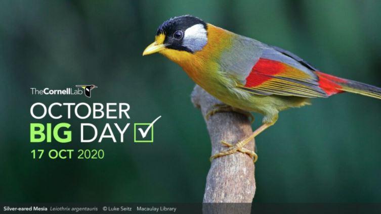 October Global Big Day 2020