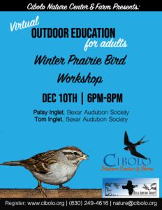 Winter bird Cibolo Dec 10