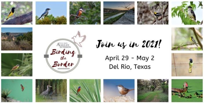 Birding the Border Festival